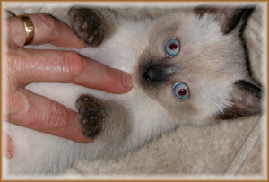 One of the FIV+ kittens, killed