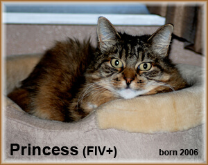 Cat Princess FIV+