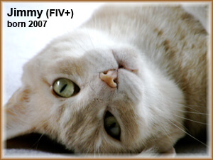 Jimmy (FIV+) Cat Lying Born 2007