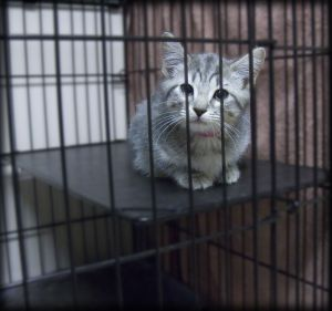Poor FIV Cat in a Cage
